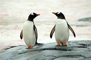 Pinguine Joachim Ringelnatz Medienwerkstatt Wissen