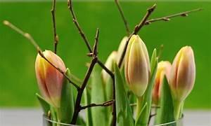 Frühlingsdeko Im Glas : fr hlingsdeko aus schwemmholz basteln und dekorieren ~ Orissabook.com Haus und Dekorationen