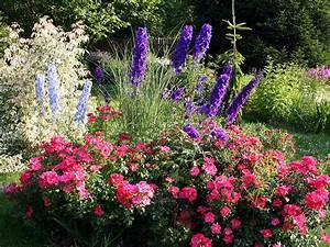 Garten Blumen Bilder : hintergrundbilder rosen garten blumen rittersporne strauch ~ Whattoseeinmadrid.com Haus und Dekorationen