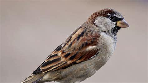 wintervogelzaehlung spatz erstmals meistgesehenes tier