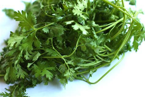 what to do with fresh fresh coriander cilantro the food u