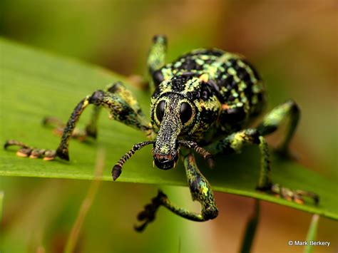 Rainforest Insects and Bugs