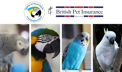 How does pet insurance apply to me? Rescue And Rehome A Bird With Birdline - British Pet Insurance