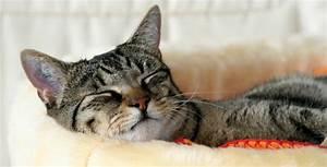 Katzen Fernhalten Von Möbeln : di tfutter f r katzen das futterhaus ~ Sanjose-hotels-ca.com Haus und Dekorationen