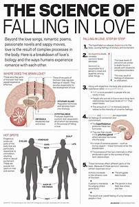 Your Brain On Love Infographic Meetmindful