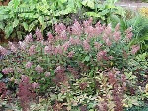 Hydrangea Paniculata Schneiden : hortensien schneiden wann und wie zur ckschneiden plantura ~ Lizthompson.info Haus und Dekorationen