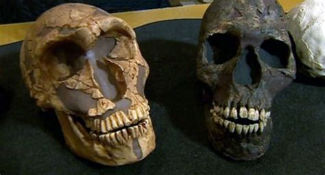 The Large Eyes Of Neanderthals Probably The Cause Of Their