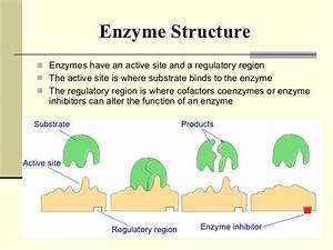 06 Enzymes
