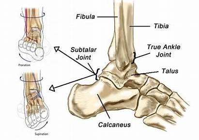 Sinus Tarsi Foot Pain Joint Ankle Neutral