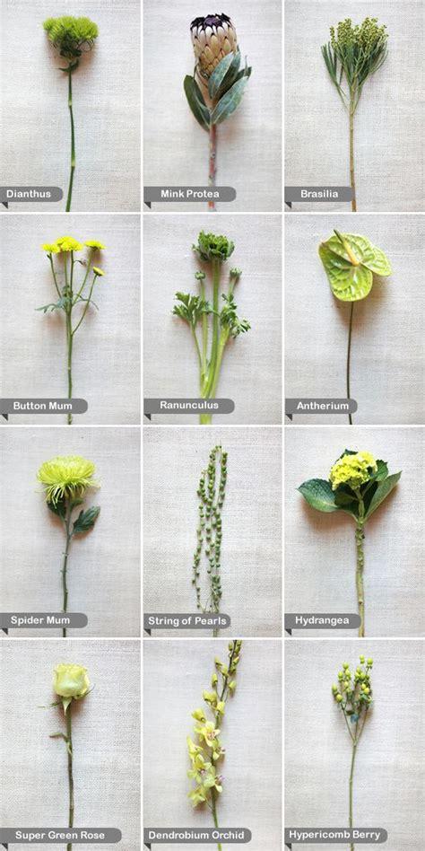 green flowers ideas  pinterest almond horn image  green   almond horn image