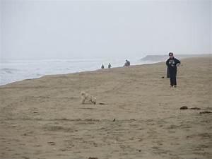 Line Dogs Chart Huntington Dog Beach Huntington Beach Ca California