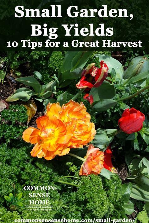 small garden ideas  tips  grow  food