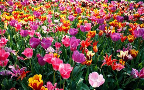 ¿Cuáles son las flores de la Primavera? ViviendoSanos com