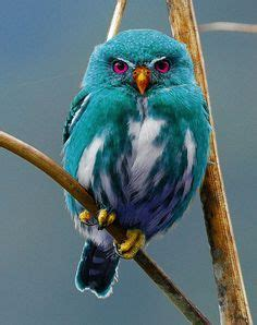 Bird Images Colorful Owls