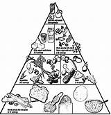 Pyramid Coloring Pages Healthy Nutrition Printable Clipart Groups Basic Colouring Foods Children Cooking Tips Coloringhome Sheets Lunchbox Teaching Popular Fun sketch template