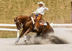 The World U0026 39 S Favourite Horse  The American Quarter Horse
