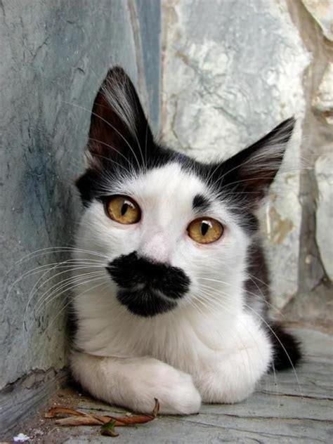 unique cats unique markings on this cat animals