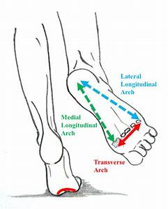 Representation Of The Three Arches Of The Foot  The