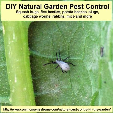 Natural Garden Pest Control  Easy, Nontoxic Home