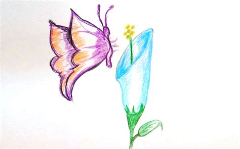 How To Draw A Butterfly Sucking Nectar Of A Flower