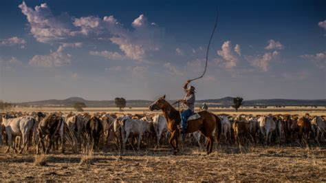 drover  cattle  months   miles
