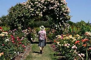 Russian River Rose Gardens Sierra News Online