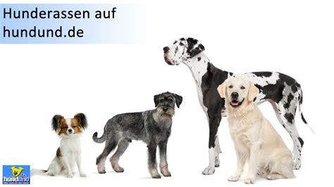 Hunde Vom Grundstück Fernhalten by Gro 223 E Hunderassen Mit Bild Hunde Hundund De