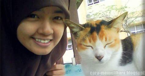 Standar Pakan Kucing Hias Yang Bagus