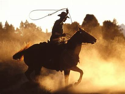 Western Horses Glory Animals Background Horse Country