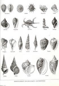 Le Coquillage Design by Les 25 Meilleures Id 233 Es Concernant Tatouages De Coquillage