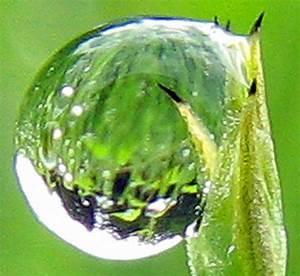 Mondkalender Für Pflanzen : ackerschachtelhalm ~ Orissabook.com Haus und Dekorationen