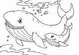 Whale Coloring Pages Humpback Printable sketch template