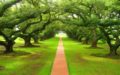 fond ecran gratuit printemps paysage fonds d 233 cran hd