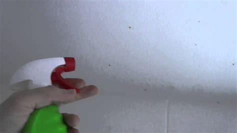 remove mold   bathroom ceiling youtube
