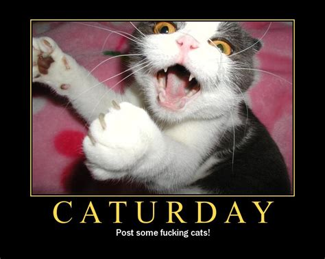 Fuck You Cat Meme - its caturday yay topic in the off topic classics