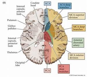 Anterior Cerebral Artery  Aca