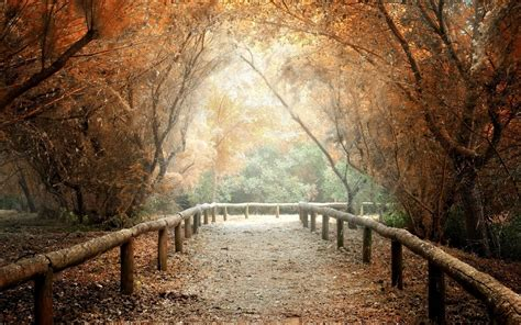 Nature Tree Leaves Path Background Wallpaper Widescreen