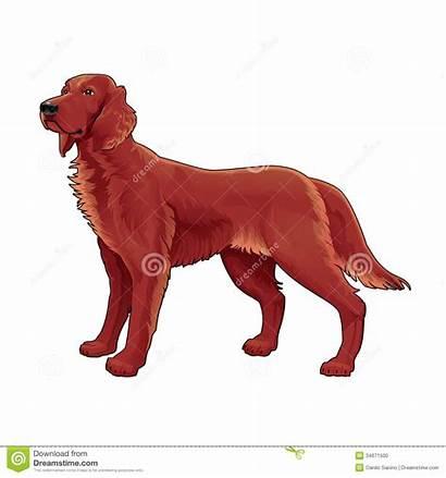 Setter Irish Clipart Dog Vector Isolated Clipground