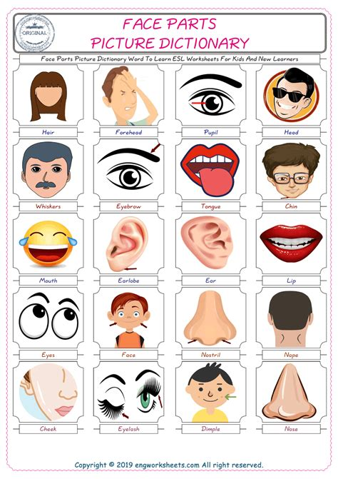 face parts esl printable english vocabulary worksheets