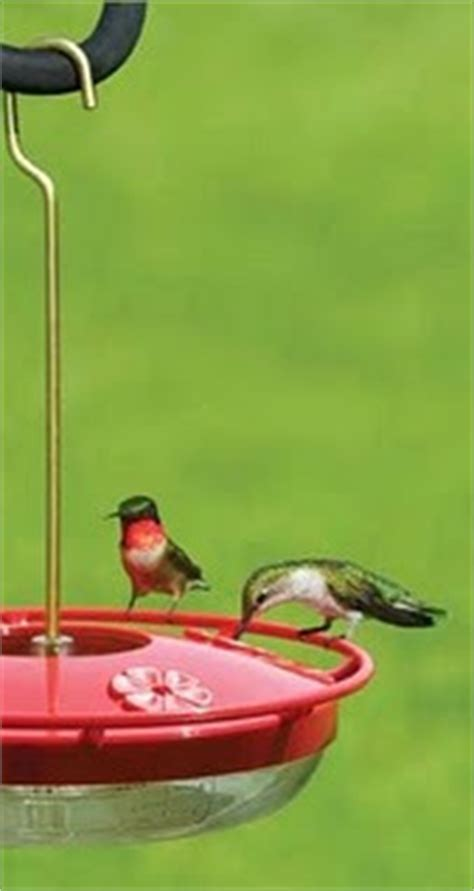 wild birds unlimited time to put out the hummingbird and