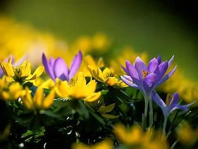 Spring Desktop Flowers Amazing Wallpapers Bliss Framework
