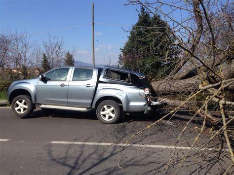 si e auto 1 firenze albero crolla in strada e si schianta su un 39 auto
