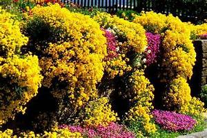 Blühende Pflanzen Winterhart : h ngepflanzen winterhart das beste aus wohndesign und ~ Michelbontemps.com Haus und Dekorationen