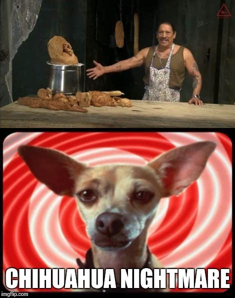Funny Chihuahua Memes - funny dog imgflip