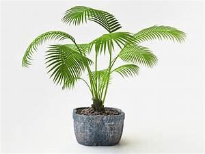 Pflanztopf Für Palmen : palmen erde in welchem substrat f hlt sie sich am wohlsten ~ Lizthompson.info Haus und Dekorationen