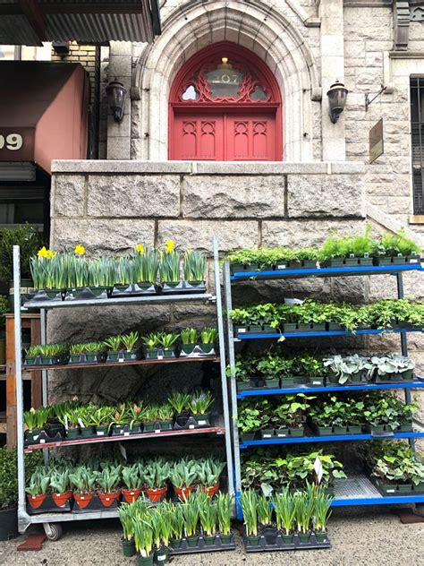 plant shed nyc a visit to a nyc plant store coffee shop houseplant care