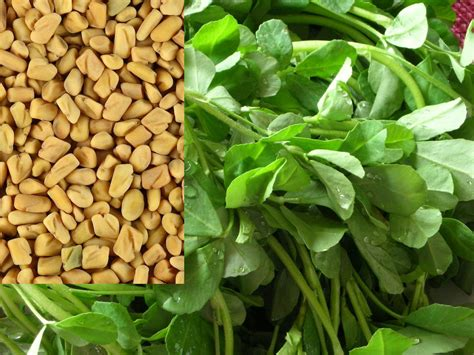 Health Benefits Of Fenugreek Detoxforlifebiz
