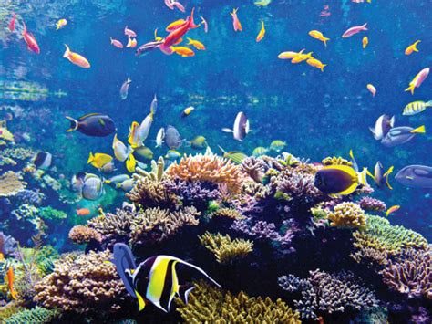 aquarium sea s e a aquarium with 1 way transfer attractions passes tours duck hippo singapore