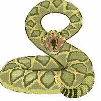 Snakes: Animated Images, Gifs, Pictures & Animations - 100 ...