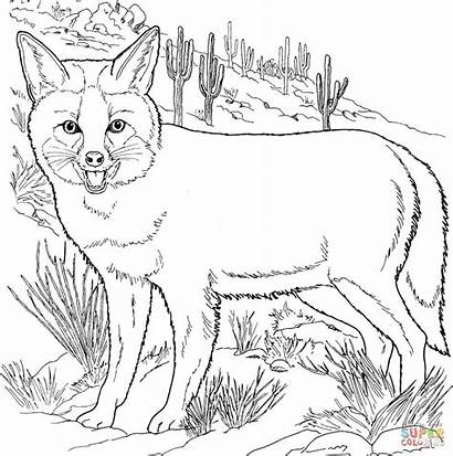 Fox Coloring Pages Grey Foxes Coyote Fennec